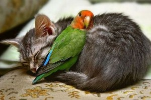 unusual-animal-friendship-01
