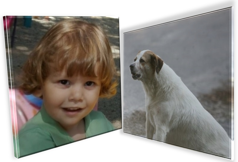 Șocant. Ionuț Anghel ar fi fost ucis de câinii de luptă ai patronului de restaurant din Parcul Tei - ionut-anghel-caine