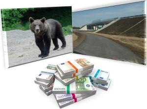 subtraversari ursi autostrada lugoj - deva