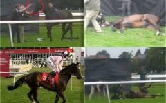 Cal de curse, împușcat în cap pe un hipodrom din Marea Britanie