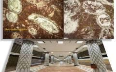 Muzeu paleontologic amenajat în stația de metrou Politehnica