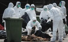 Gripa aviară lovește fermele de păsări din Olanda
