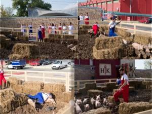 concurenti iadul bucatarilor - porci