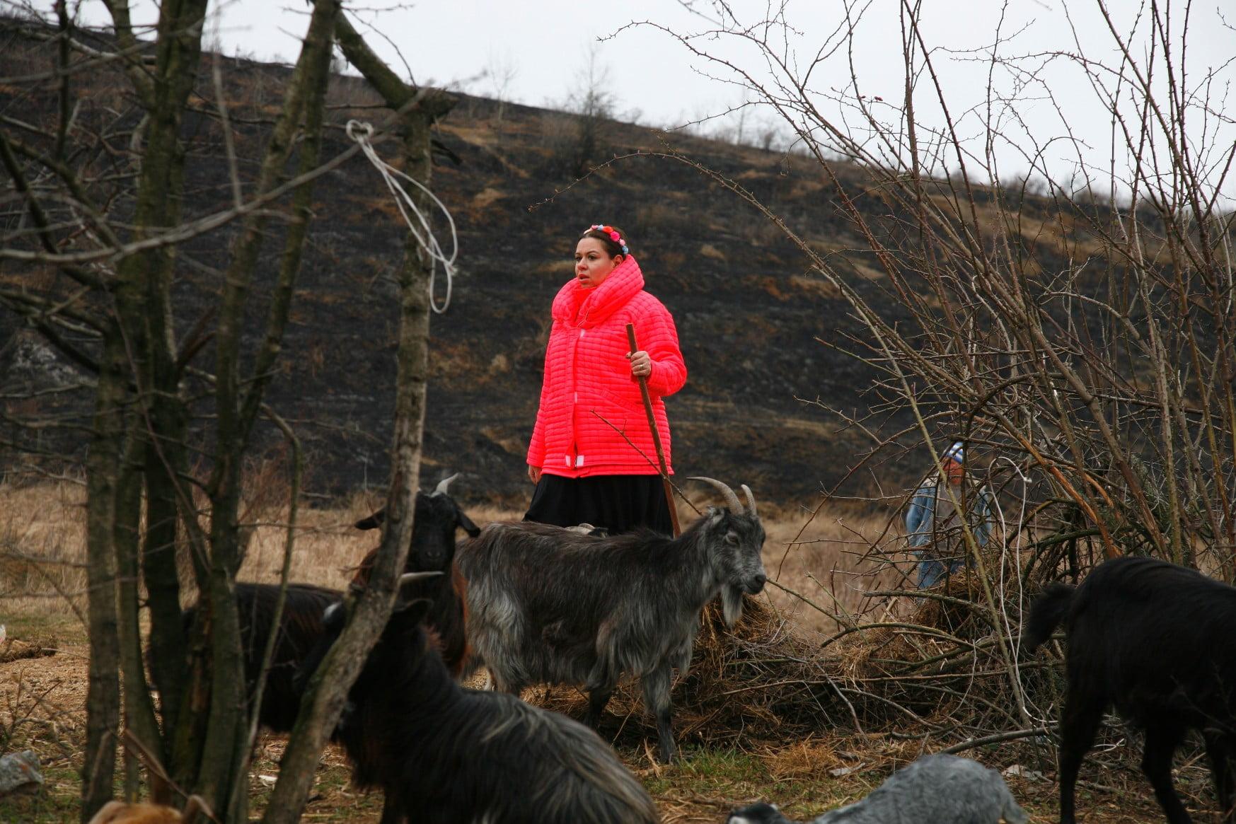 oana roman - turma capre