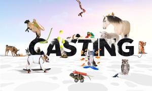 BestPet_Casting_comp