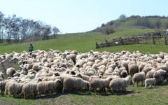 Fundația ADEPT Transilvania și Innovation Norway propun un plan de modernizare a stânilor din România