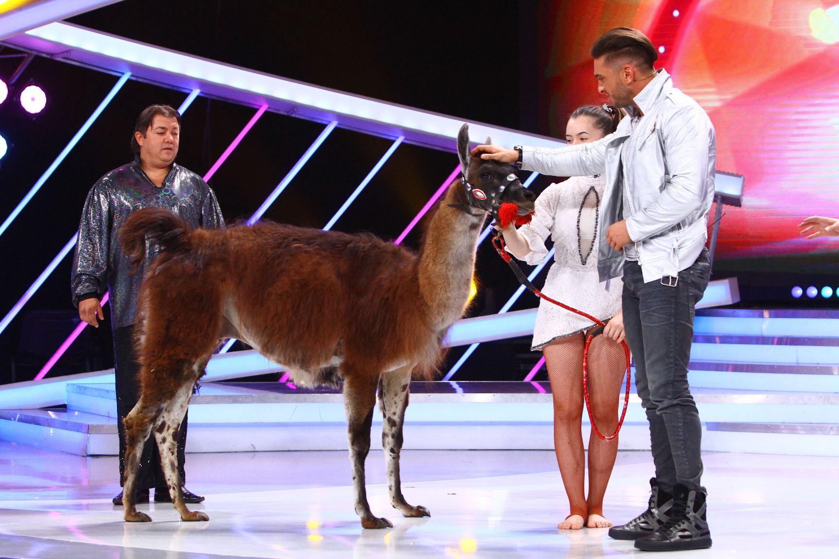 next-star-lama