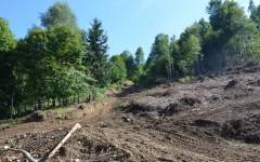 Dosar penal și amenzi usturătoare pentru tăierile ilegale de pădure din zona lacului Vidraru