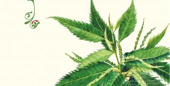 Coperta Enciclopedia Plantelor